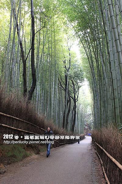 39.竹林步道