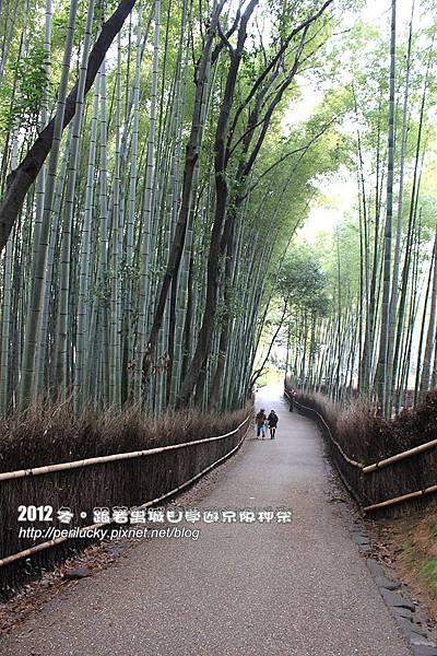 41.竹林步道