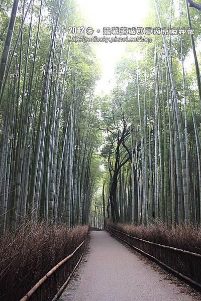 40.竹林步道