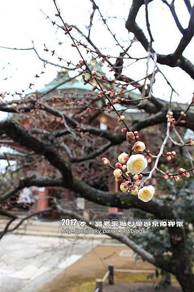 12.寶物殿前的梅花
