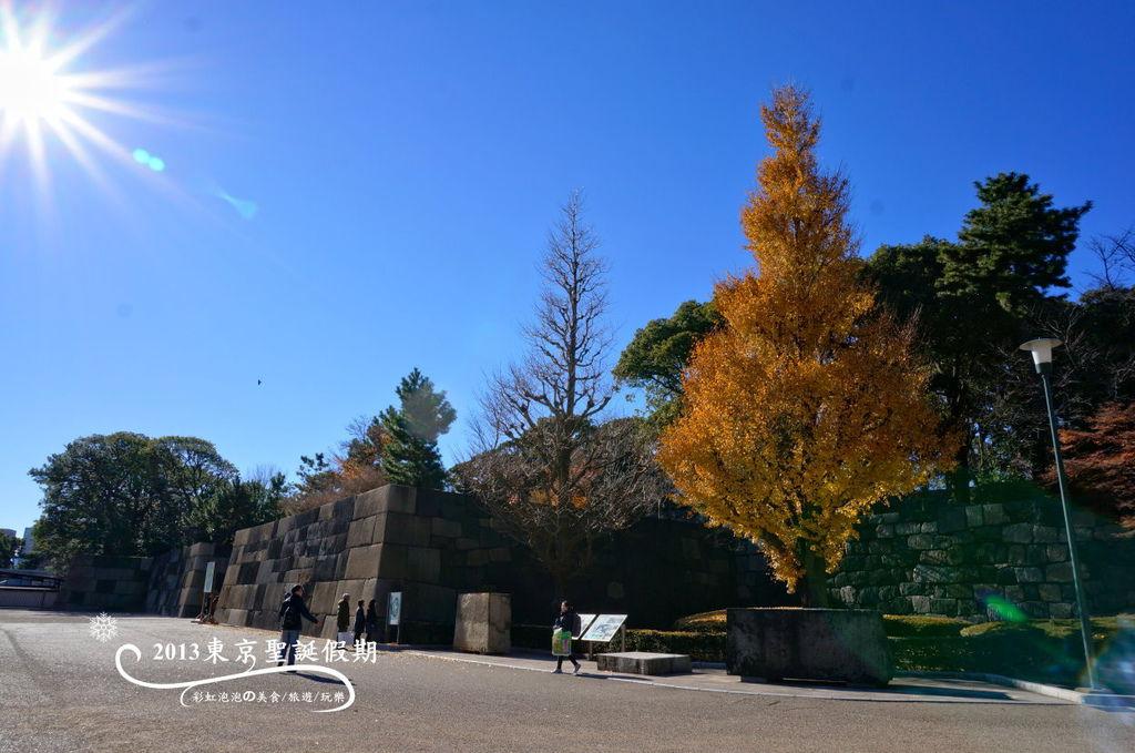 67中之門遺跡旁的銀杏樹