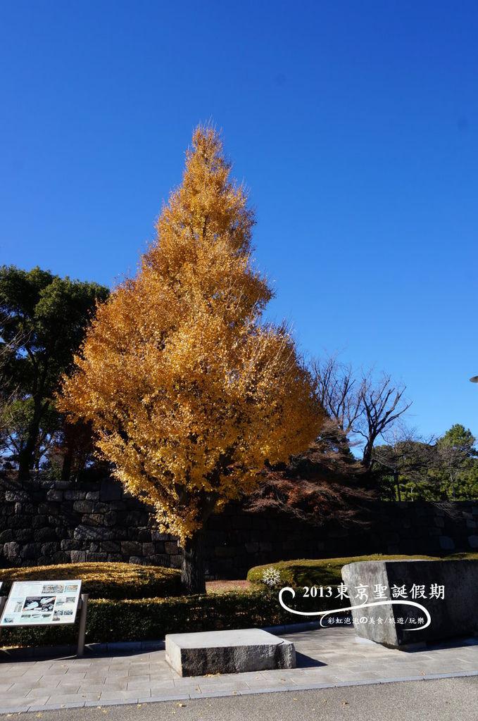 68.中之門遺跡旁的銀杏樹