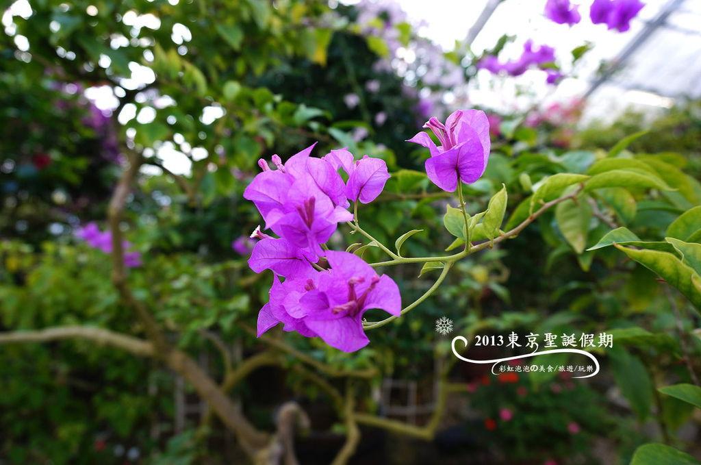 19.熱帶植物館