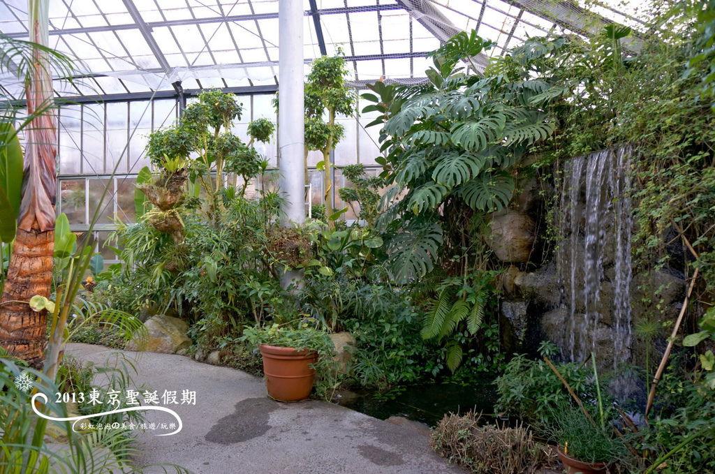 11.熱帶植物館