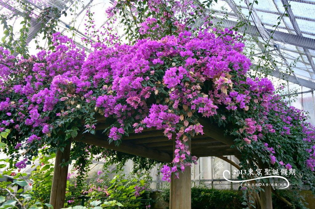 16.熱帶植物館
