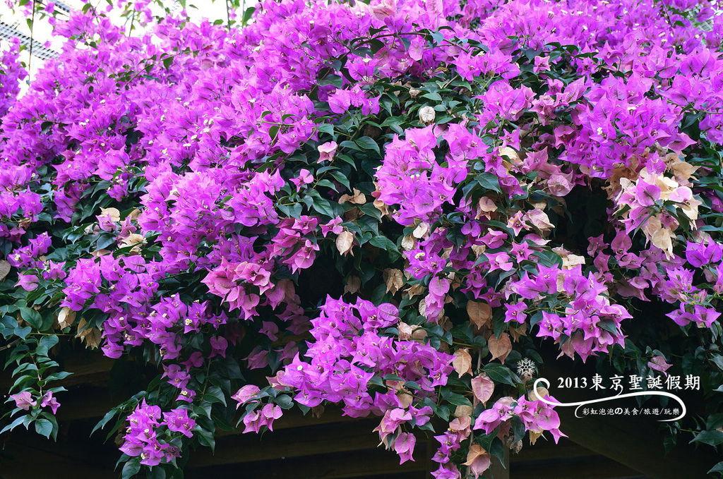 17.熱帶植物館