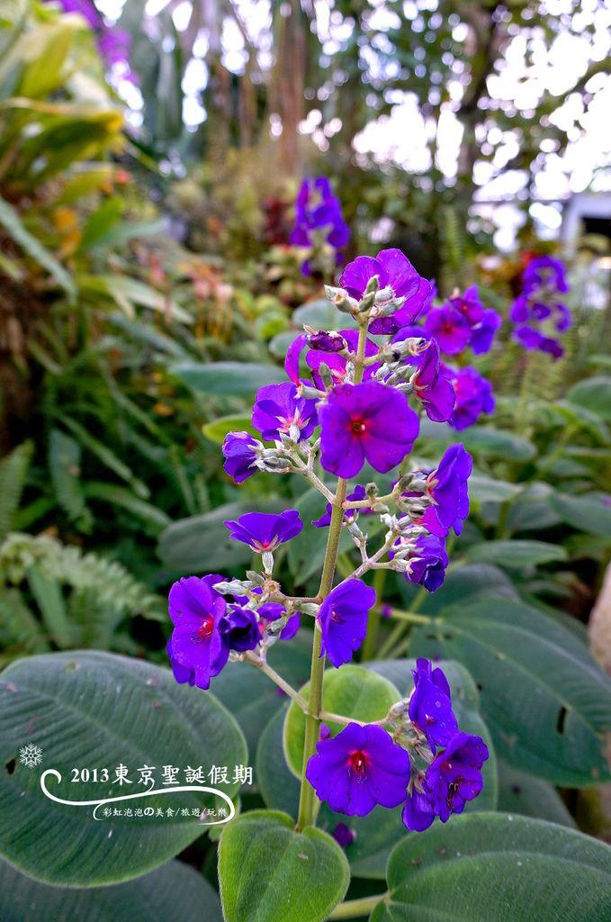 13.熱帶植物館