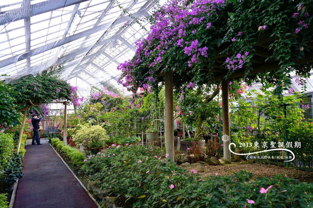 15.熱帶植物館
