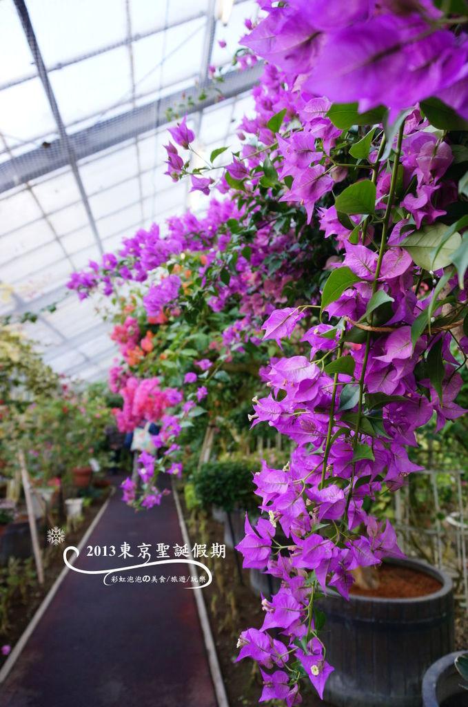 18.熱帶植物館