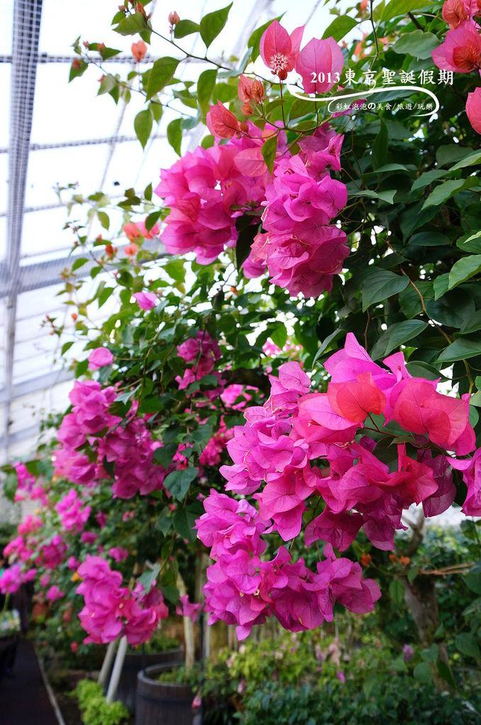 20.熱帶植物館