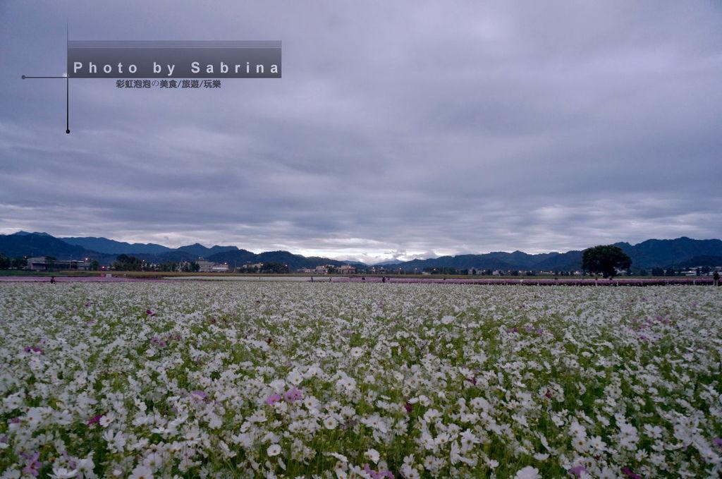 4.2014新社花海