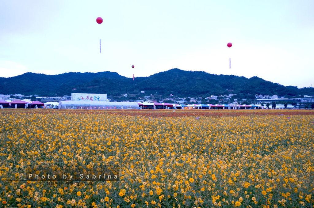 10.2014新社花海-波斯菊