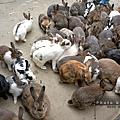 8.棗莊-小動物的家
