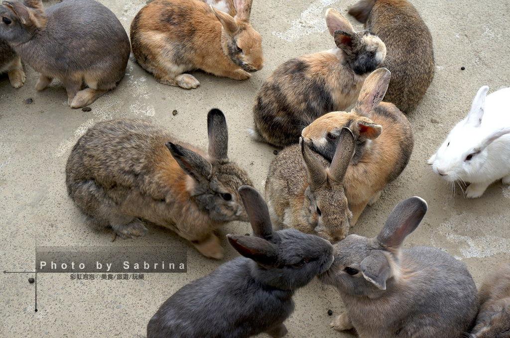 9.棗莊-小動物的家