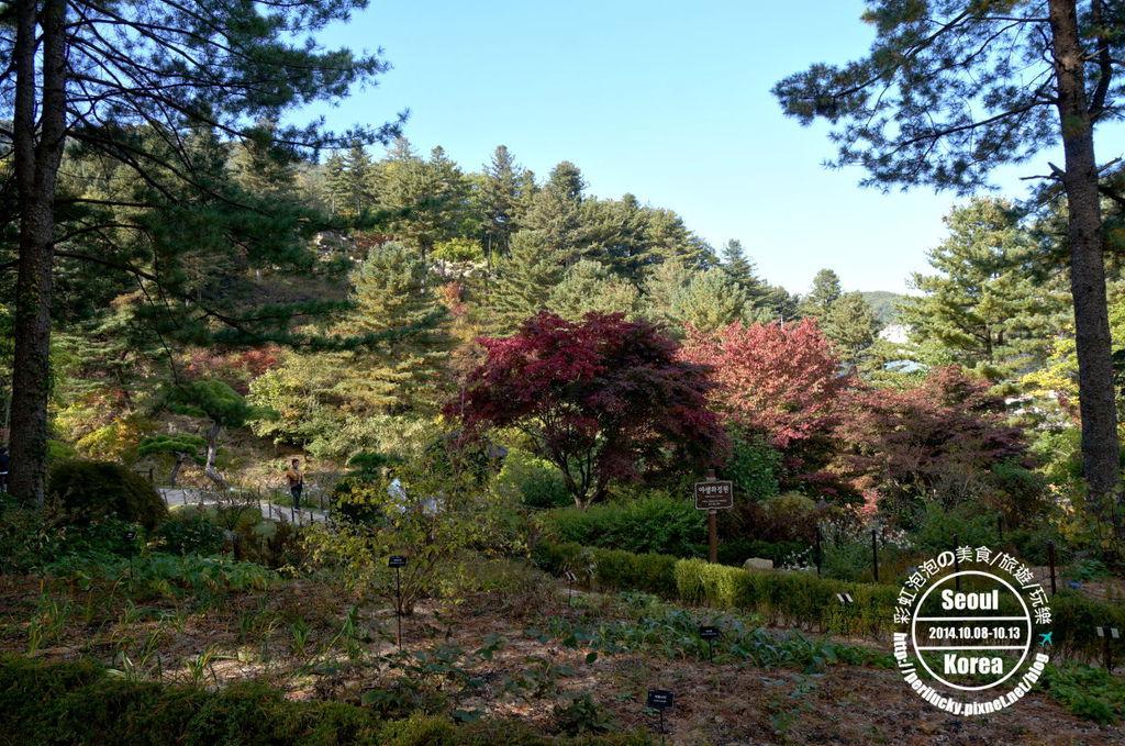 128.晨靜樹木園-針葉樹庭園