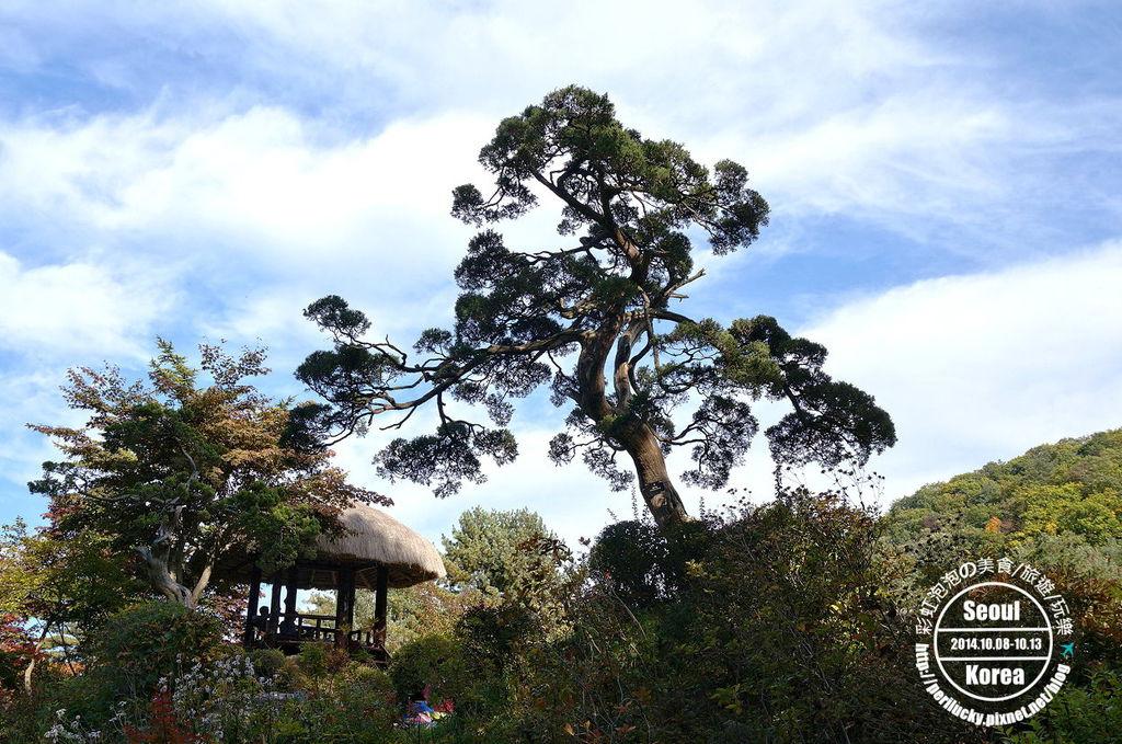 123.晨靜樹木園