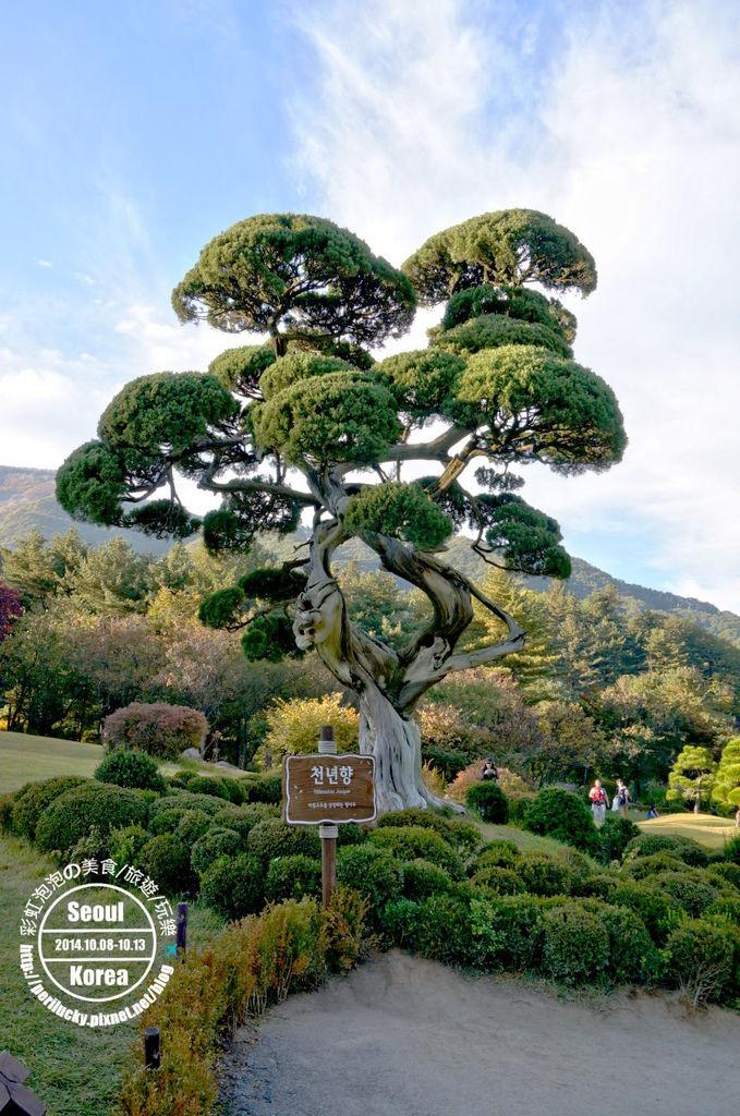 172.晨靜樹木園-千年香