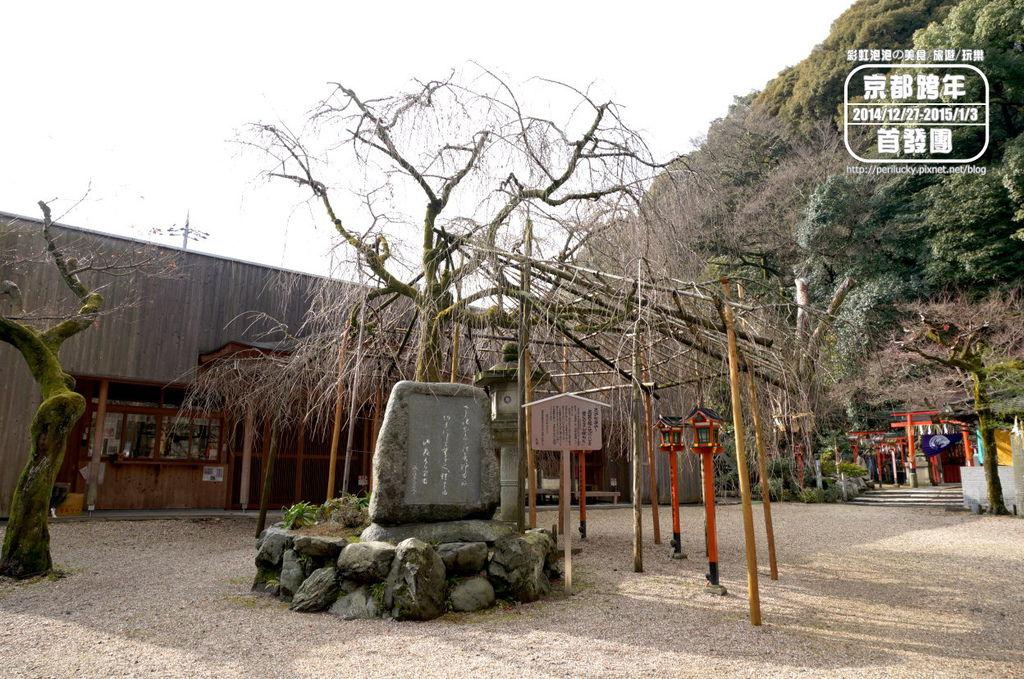 102.長等神社-山櫻.jpg