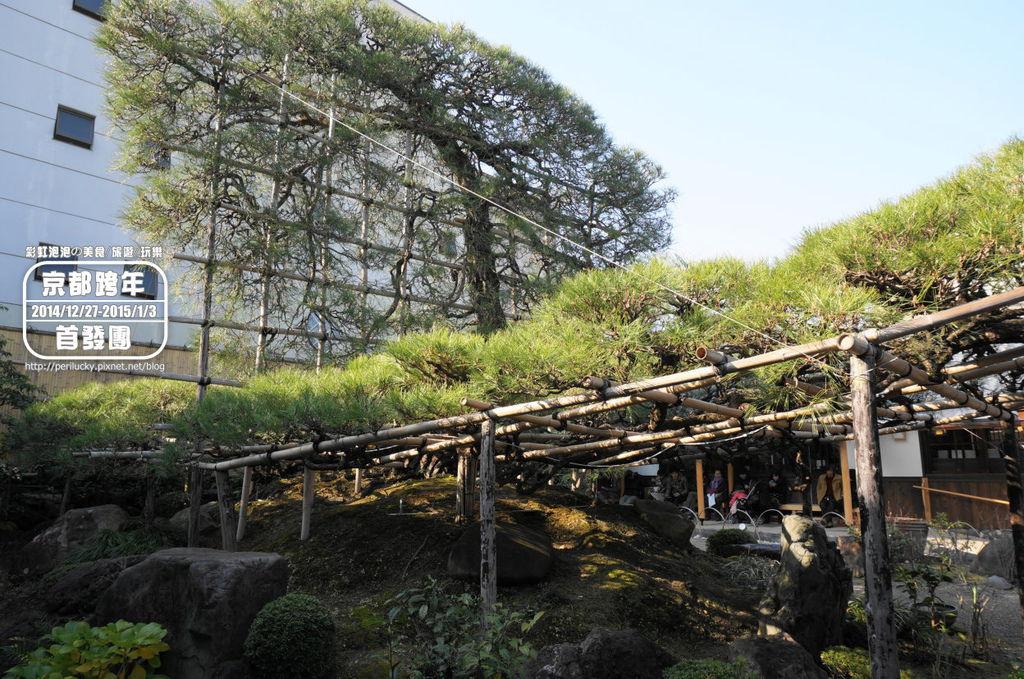 18.中村藤吉本店-日式庭園-黑松.jpg