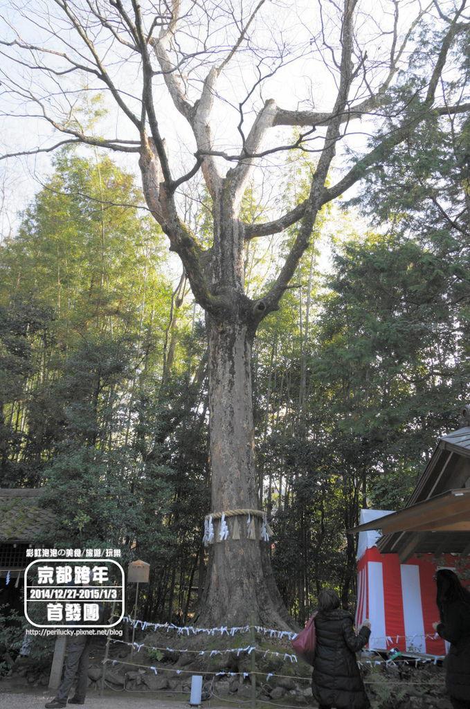 79.宇治上神社-兔樂之樹.jpg