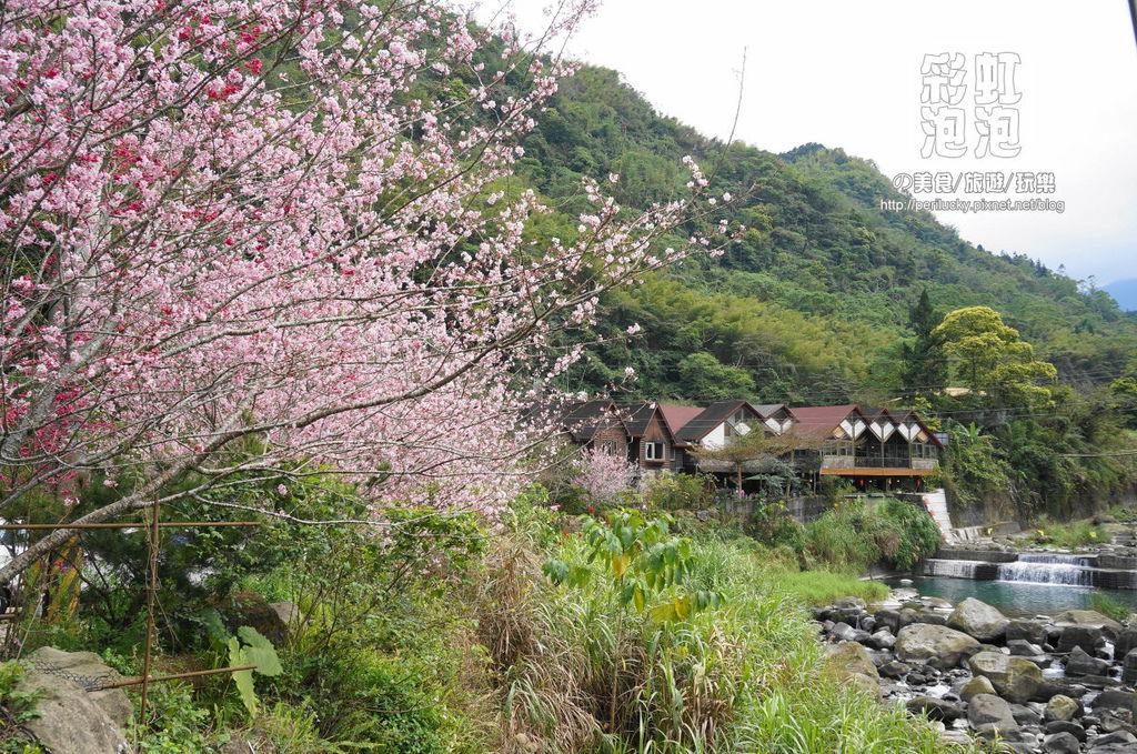 3.和雅谷餐廳-櫻花.jpg