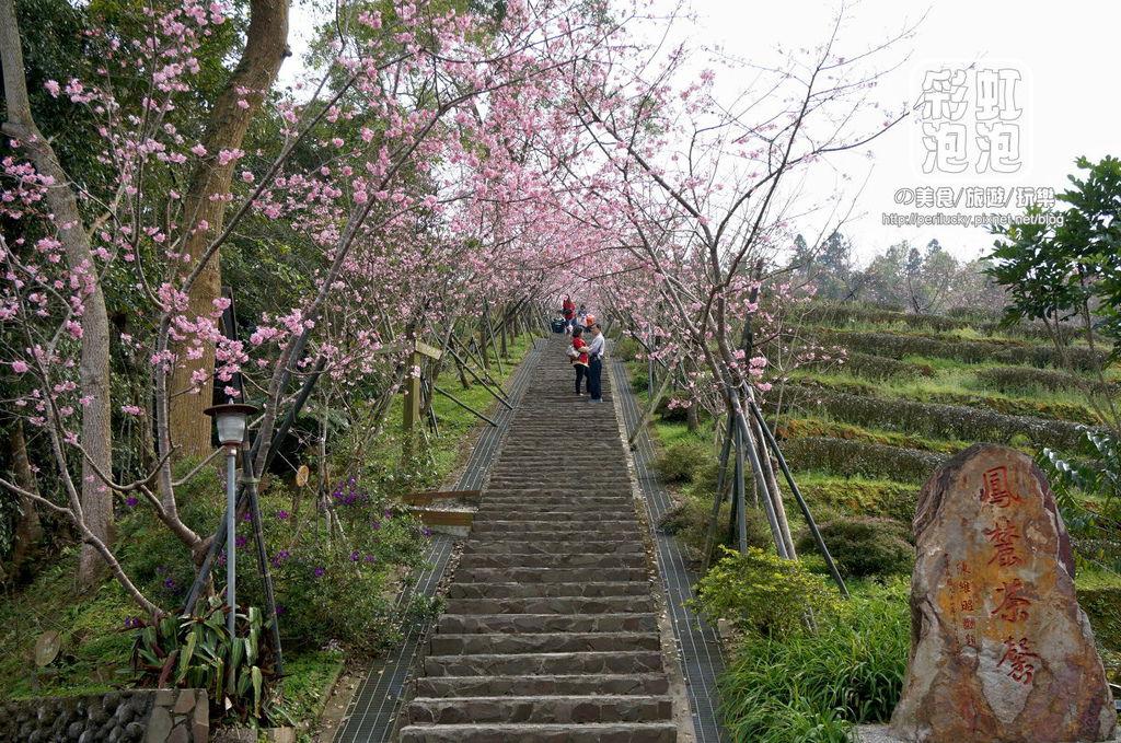 4.台大茶園-櫻花步道.jpg