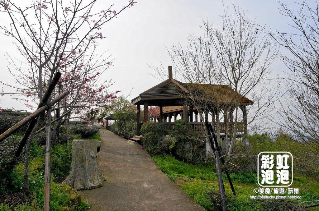 14.台大茶園-觀景迴廊.jpg