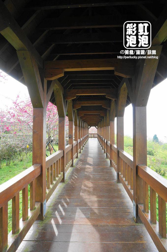 15.台大茶園-觀景迴廊.jpg