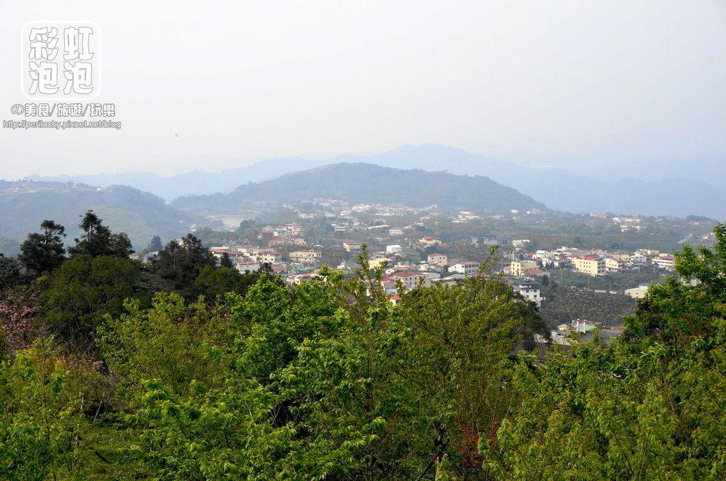 16.台大茶園-觀景迴廊遠眺.jpg