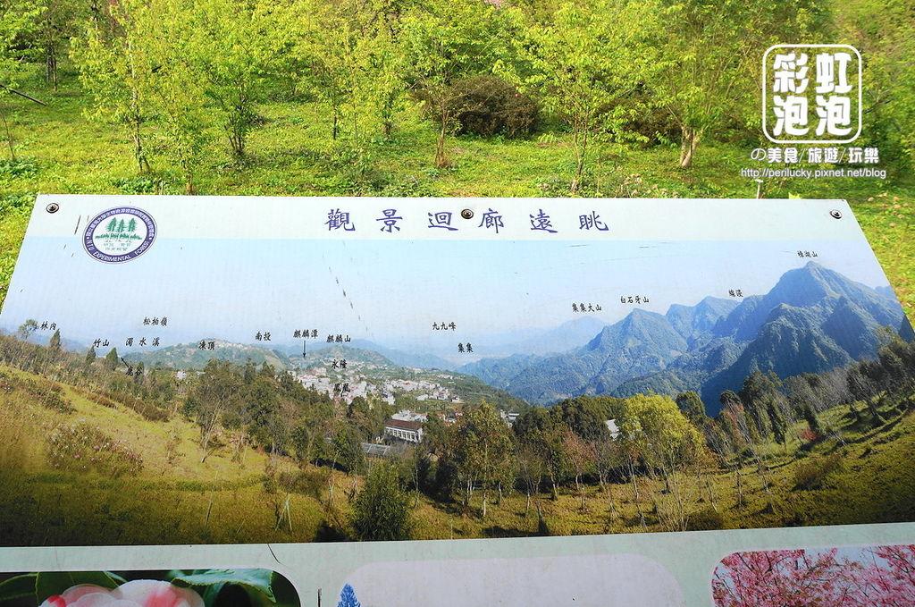17.台大茶園-觀景迴廊遠眺.jpg