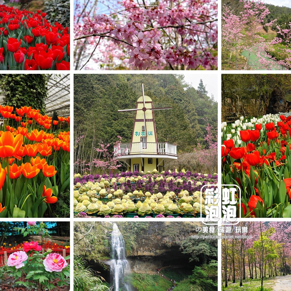 1.杉林溪森林生態渡假園區-櫻花、鬱金香花季.jpg