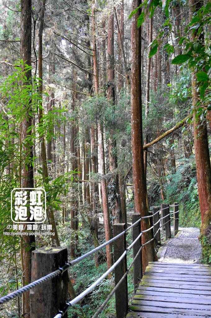 18.杉林溪森林生態渡假園區-穿林棧道.jpg