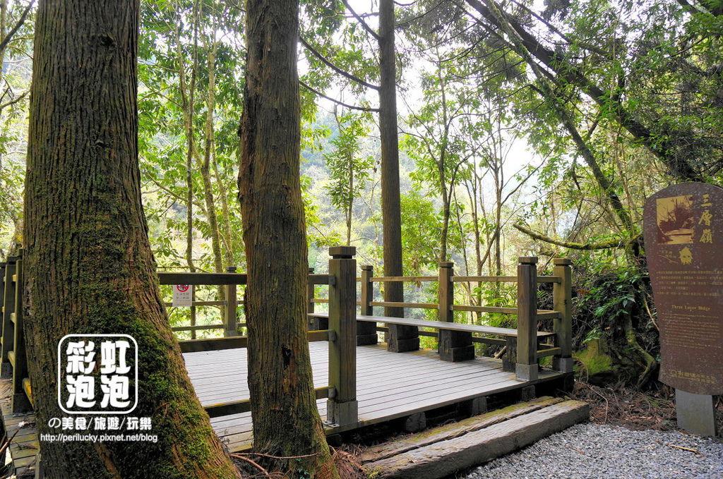 25.杉林溪森林生態渡假園區-穿林棧道三 層嶺.jpg