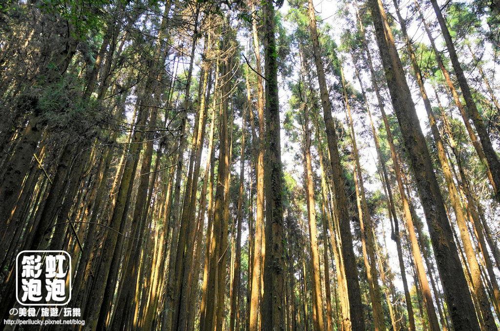 20.杉林溪森林生態渡假園區-穿林棧道.jpg