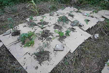 2厚土三明治種植