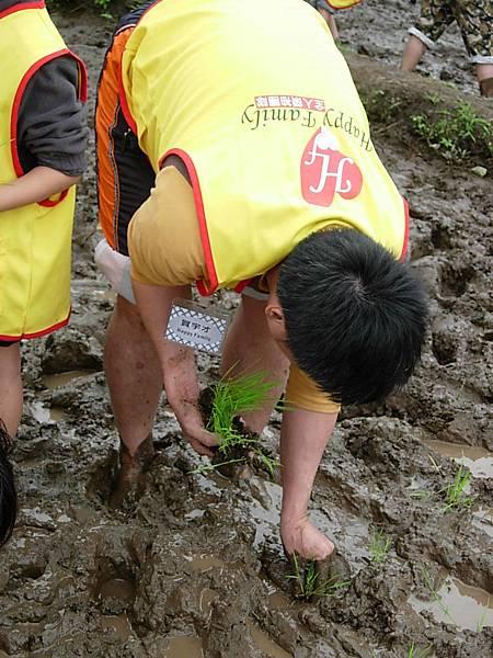 插入泥中.JPG