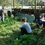 整理菜圃.JPG