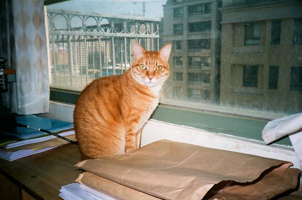 窗前的貓(補光)