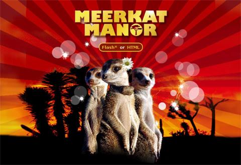 meerkat_manor.jpg