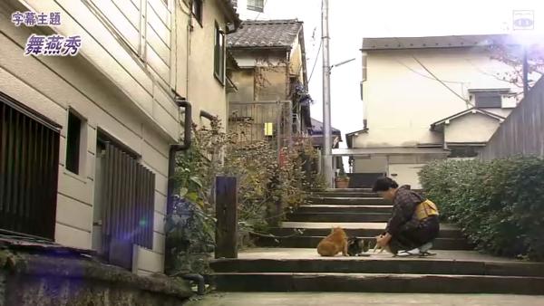 老闆娘在神樂阪餵貓