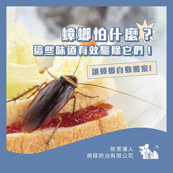 蟑螂害怕的味道_工作區域 1.png