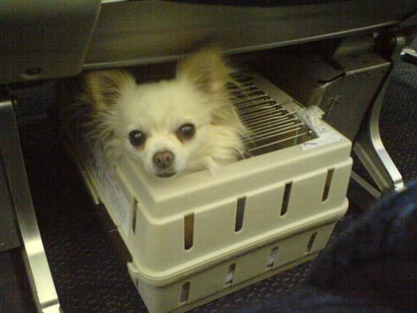 飛機上的狗狗