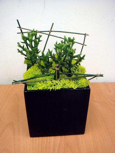 組合盆栽班多肉植物1.JPG