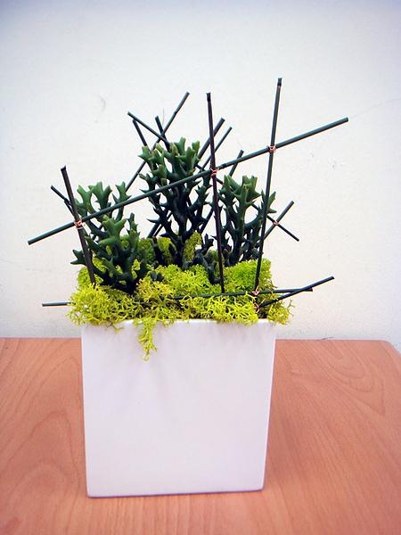 組合盆栽班學生作品3.JPG