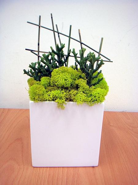 組合盆栽班學生作品2.JPG