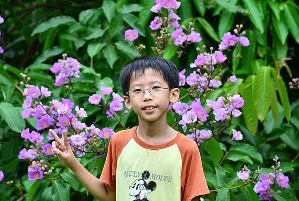 大花紫薇15