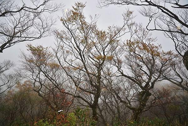 山毛櫸步道 (2)