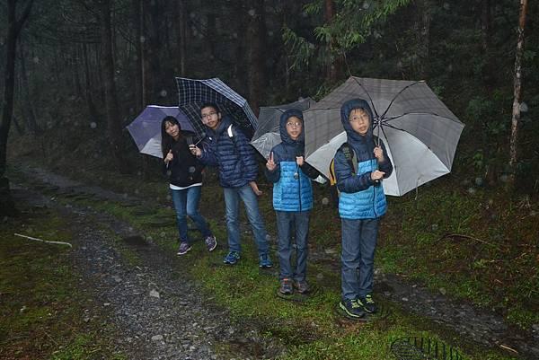山毛櫸步道 (16)