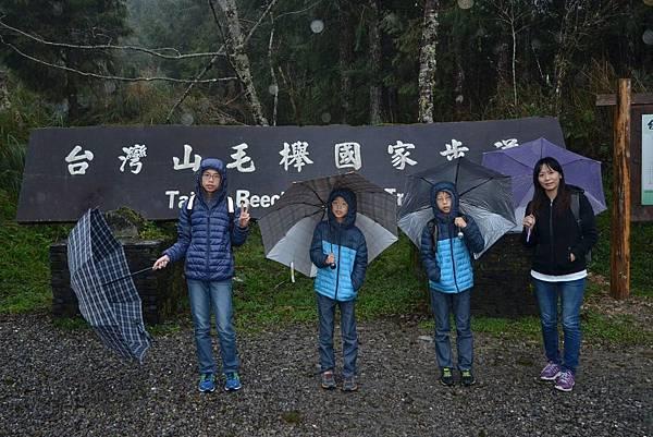 山毛櫸步道 (29)