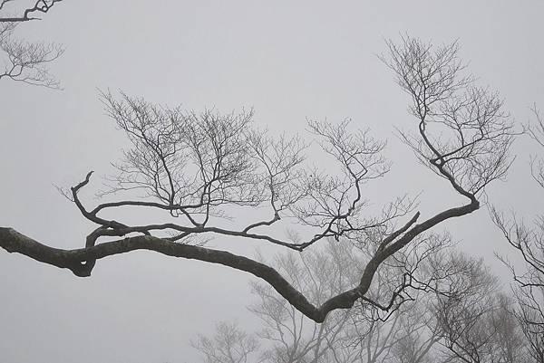 山毛櫸步道 (36)
